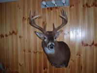 St Claire's Buck 2014
